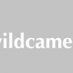 Op zoek naar een cameraval voor in de natuur of eigen tuin?